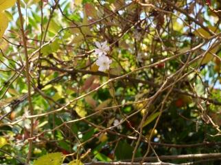 November Blossom