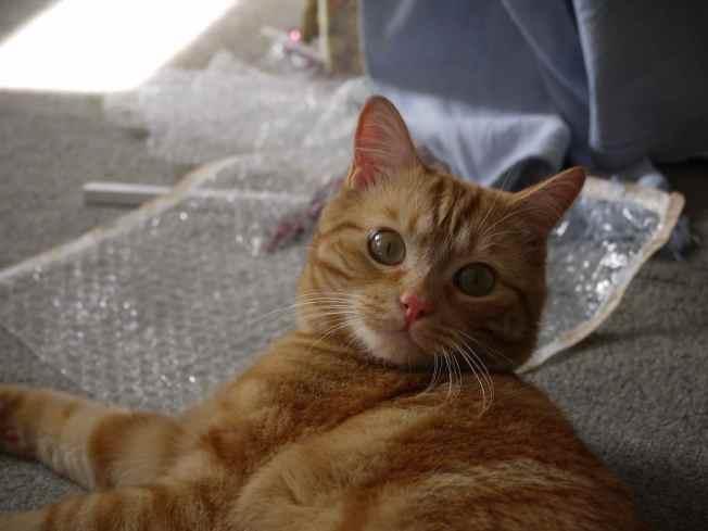 Confident Cat