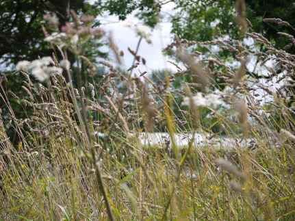 Grass growth