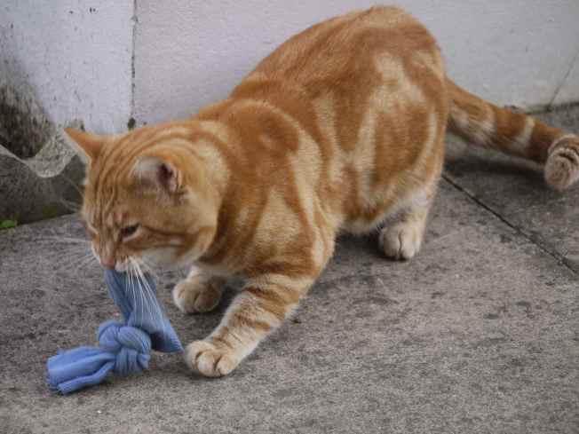 Ginger Likes Catnip
