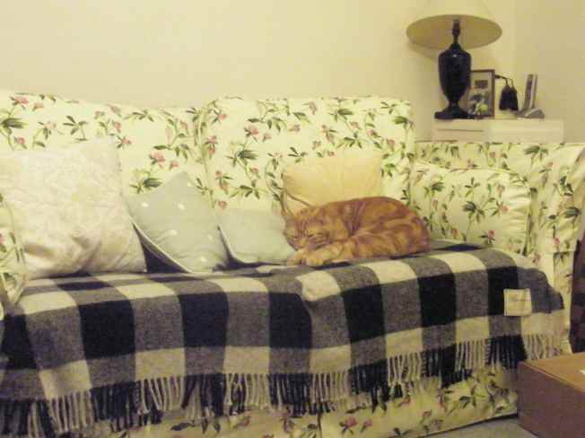 This Sofa Was Made For One Cat