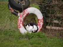 Black and White Feral and Lifebuoy