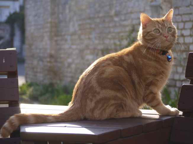 Springtime Ginger Ninja