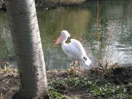 sunny pelican