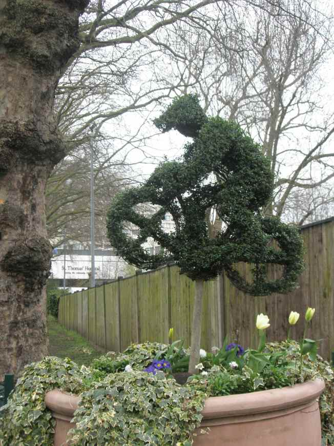 Topiary Bike With Tulips