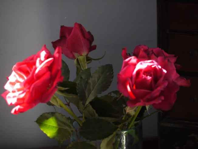Roses for Mrs R