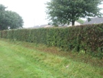 Holeless Hedge
