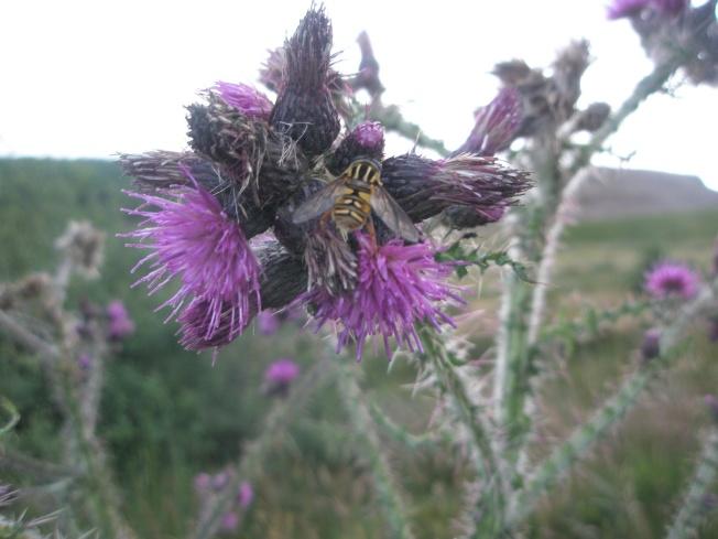 Sperrins Bee