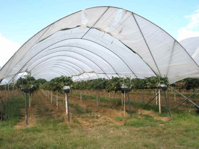 Polytunnel Arc