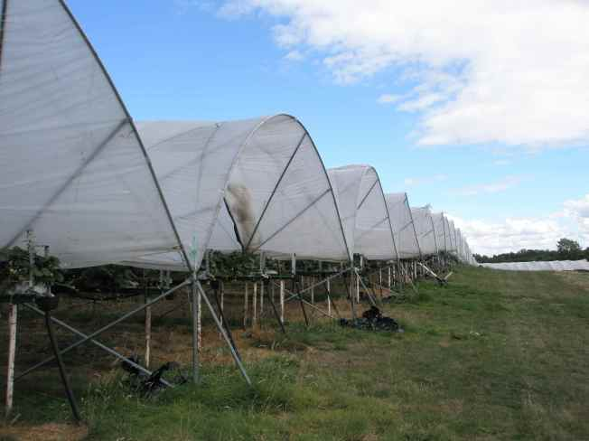 Polytunnels From the Side