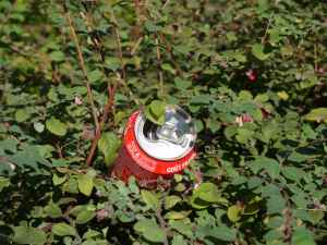 Can in Bush