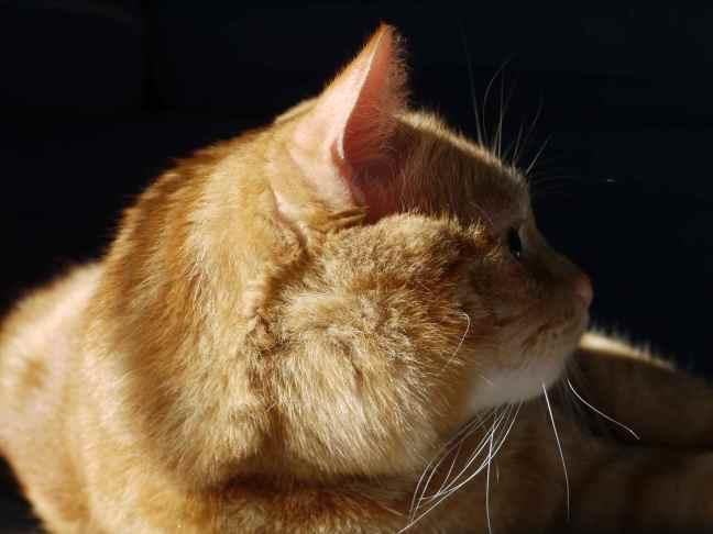 MasterB in Profile