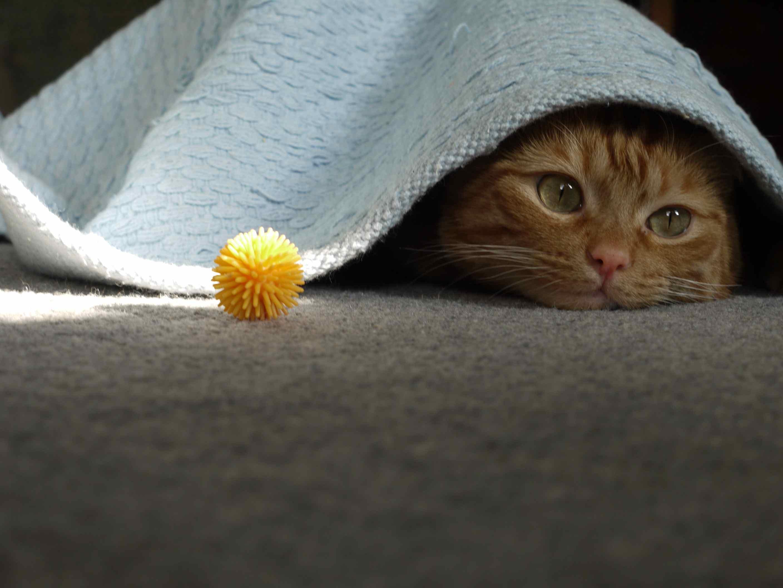 Celia Cat Rescue