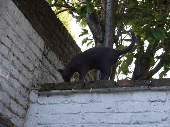 Feline Jean Shrimpton