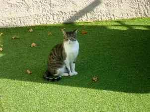 Astroturf Cat