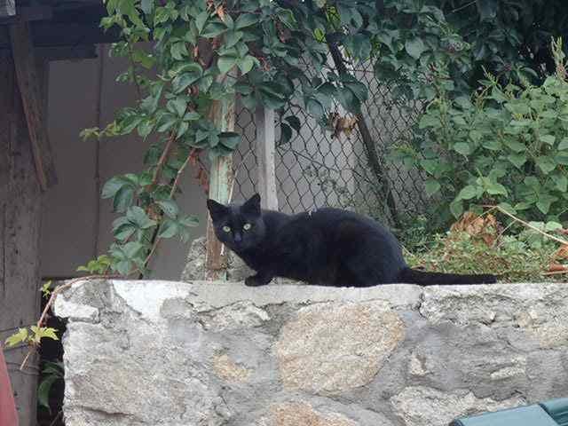 Black Cat Manage Spirit Marvel Heroes