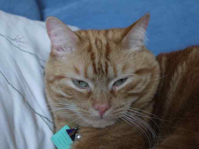 Ginger Ninja Naptime