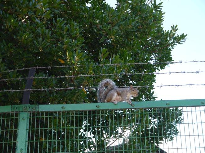 Noisy Squirrel