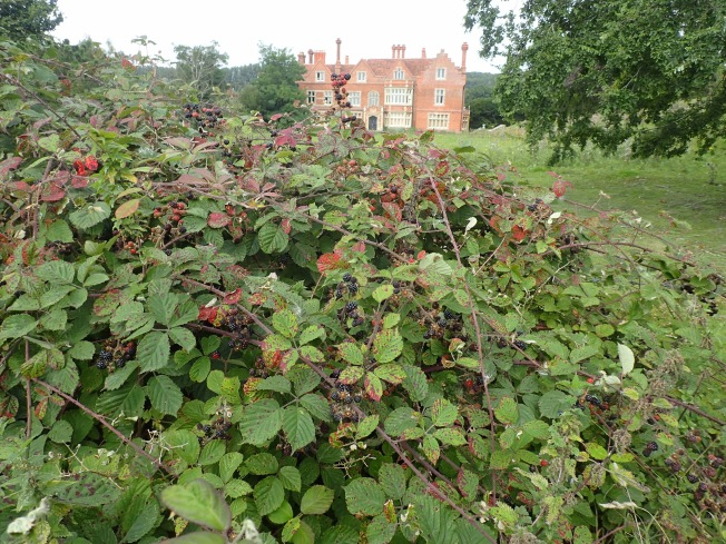 Roydon Hall with Blackberries