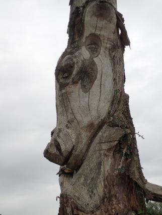 Deer face
