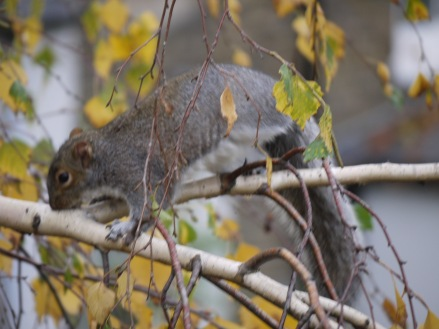 Squirrel blur