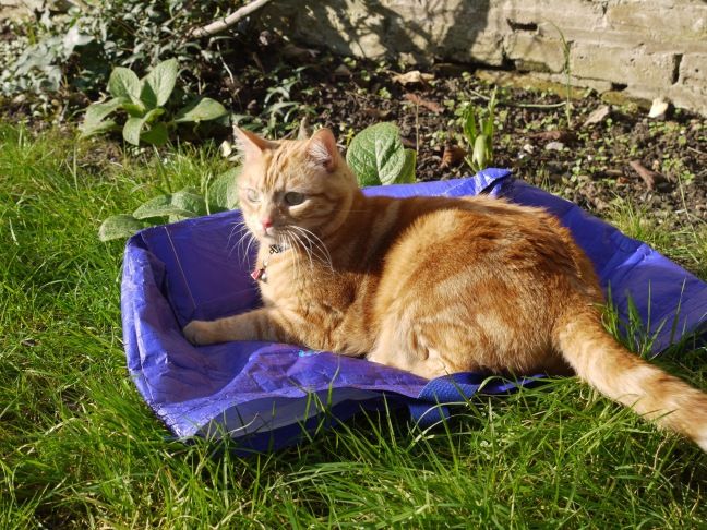 Sitting pretty on the recycling bag yesterday