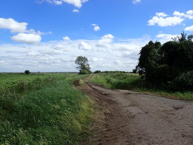 local landscape