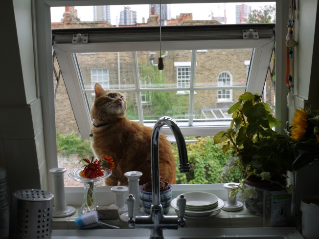 On the kitchen window ledge