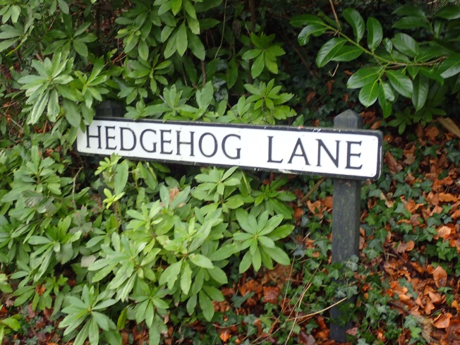 Hedgehog Lane