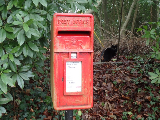 Postbox and Black Cat