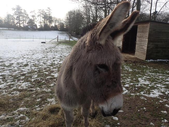 Taupe Donkey