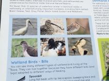 Ornithological detail